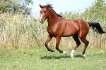 lean-performance-horse