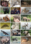 Mammal_Diversity_2011