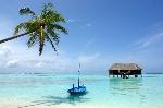 Bahamas-alex-2-planwallpaper-com
