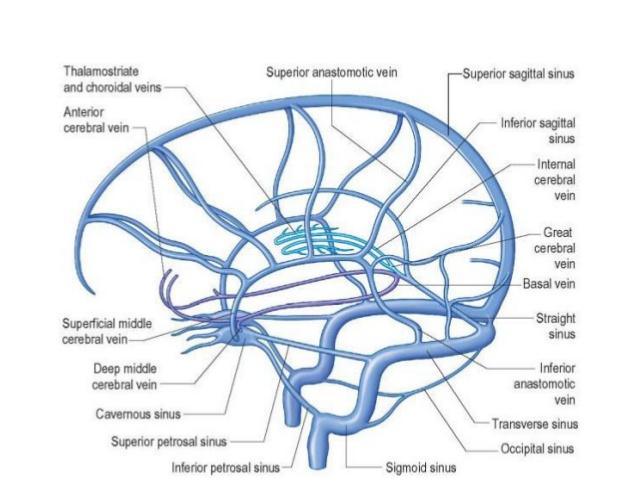 superior-inferior-5_dural-venous-sinuses-on-ventricular-anatomy-neuroradiology