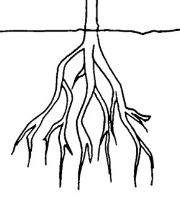 root02