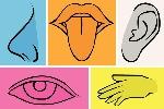 6-cunetriosidades-sobre-los-5-sentidos-y-la-percepcion-de-las-cosas