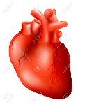 13781019-el-corazón-humano