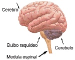 nervi 8