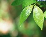 foglie_20
