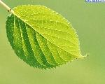 foglie_18