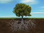 Frane-e-inondazioni-ora-si-combattono-rinforzando-le-radici-delle-piante-640x480