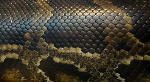 depositphotos_13918605-stock-photo-snake-skin