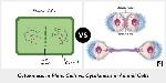 cytokinesis-in-plant-cells-vs-cytokinesis-in-animal-cells-990x495