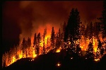 news_wildfire