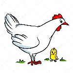depositphotos_105872054-stock-photo-white-chicken-cartoon