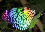 Rainbow-butterfly-photos-1