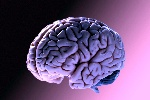 Il-cervello-si-può-ringiovanire-lo-dimostra-uno-studio