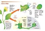 Importancia-de-la-fotosíntesis