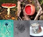 Fungi_collage (1)