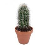 cactus-prinly