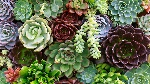succulents-guide-feat1
