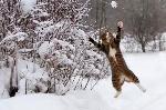 3912389-animali-sotto-la-neve.600