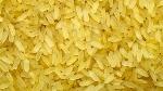 Golden-Rice1-e1469810499813