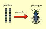 geno and pheno