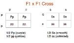analyzing square