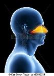 cavidad-nasal-dibujos_csp19549334