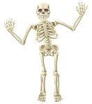 1200-26938601-human-skeleton