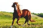 que-come-caballo