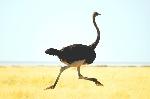 donde-vive-el-avestruz