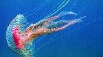 medusas-como-animales-invertebrados-2