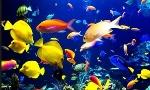 Cómo-se-reproducen-los-peces-2