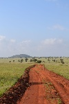 Dirt_road_facing_south_in_the_LUMO_Community_Wildlife_Sanctuary_near_the_main_gate_in_Kenya_4