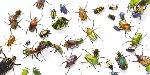 Nieuw-onderzoek-zoveel-gram-insecten-eet-jij-per-jaar_img900