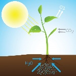 fotosintesis-ilustracion-min-e1477935671478
