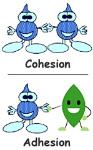 cohesion_adhesion
