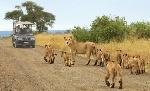 Kruger-National-Park-647x395