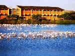 compao_regresso_flamingos