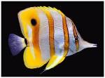 peix ratlles