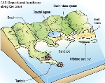 Coastal Landforms depositional