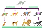 speciation_med