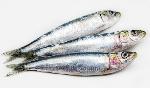 sardina-e1501669028637