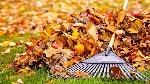 fall-activities-that-burn-calories