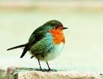 πτηνά