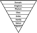 Taxonomy Levels