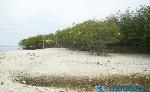 Pantai-Hutan-bakau1