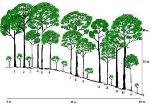 hutan1