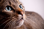 cat_whiskers