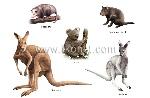 examples-of-marsupials-289660