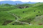 πράσινα-ιβά-ια-και-πρόβατα-35515933
