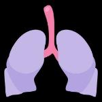 10365deaa35f16c46f18a0930a6f3a08-lungs-human-organ